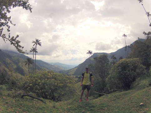 Wax Palm Forest in Colombia 2013