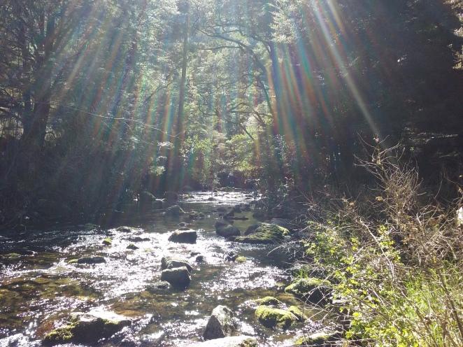 River just below the Riwaka Resurgence